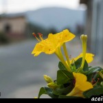Foto flor maceta